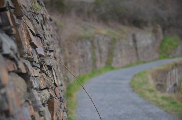 Abenteuer Rotweinwanderweg © entdecker-greise.de