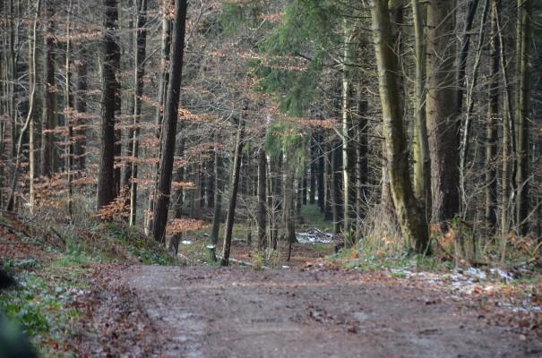 Abwechlung im Scherfbachtal ©entdecker-greise.de