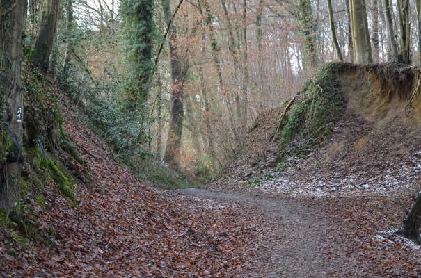 Alter Hohlweg hinauf nach Romaney ©entdecker-greise.de