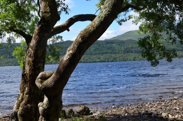 Auch ein gutes Plätzchen zum Campen, mit direktem Blick auf Loch Lomond. ©entdecker-greise.de