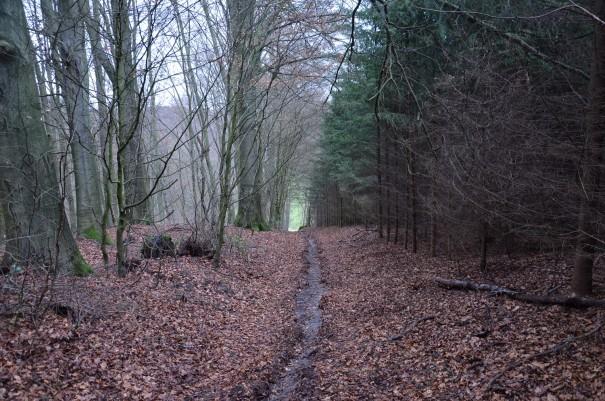 Das Wasser ist diesen Weg schon vor mir gegangen ... ©entdecker-greise.de