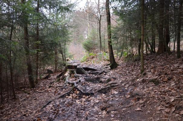 Das hat doch schon fast etwas von einem Wildnis-Trail ... so macht Wandern richtig Spaß! ©entdecker-greise.de