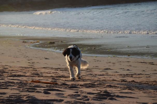 Nicht nur die DFSD Seawas, auch Schottland war wegen des Klimas ideal für meinen Hund! ©entdecker-greise.de