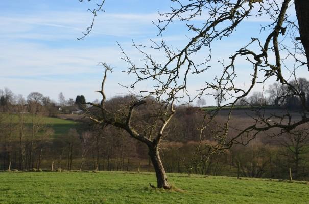 Obstbaumwiesen im Bergischen - heute schon fast eine Seltenheit ©entdecker-greise.de
