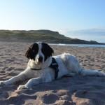 So entspannt kann Urlaub mit Hund sein! ©entdecker-greise.de