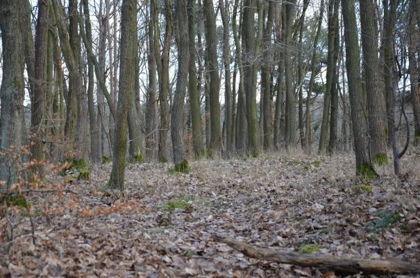 Auch Waldgebiete werden auf dem Ahrsteig durchwandert ©entdecker-greise.de