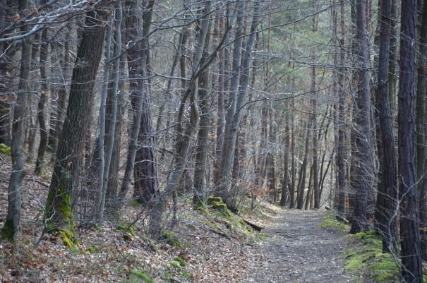 Im Sommer gibt es auf dem Ahrsteig zahlreiche Möglichkeiten unter dem Schutz der Bäume zu wandern. ©entdecker-greise.de