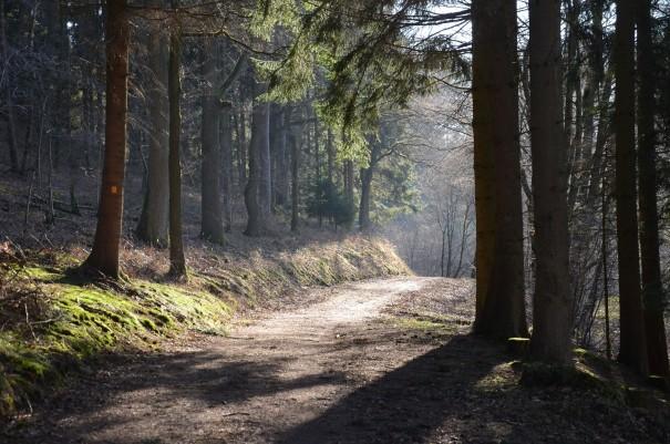 Lichtspiel auf dem Bergischen Weg ©entdecker-greise.de