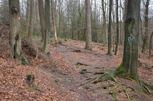 Naturbelassene Pfade auf dem Bensberger Schlossweg ©entdecker-greise.de