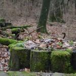 Schönes gibt es überall zu entdecken, wie hier auf dem Bensberger Schlossweg ©entdecker-greise.de
