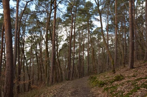 Verschiedenste Baumbestände säumen den Ahrsteig. ©entdecker-greise.de