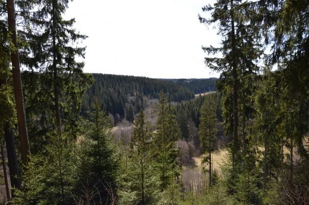 Der Blick über die Wipfel des Eifler Mischwaldes. ©entdecker-greise.de