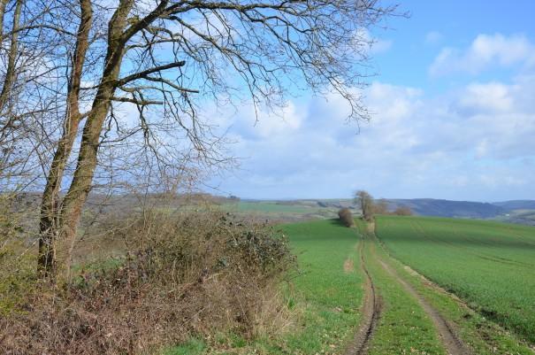 Der Weg wechselt ständig auf dem Pfälzer Höhenweg  ©entdecker-greise.de