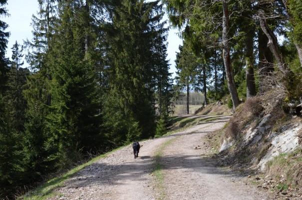 Für Maja gibt`s bim Wandern kein Halten, so auch hier auf dem Rückweg zum Wanderparkplatz. ©entdecker-greise.de