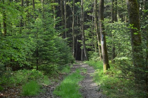 Hier an diesem Ort hätte ich all die Schönheit gerne geteilt #TTwandern auf dem Westerwald Steig ©entdecker-greise.de
