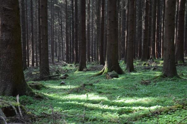 Mal ehrlich hier fehlen doch nur noch die kleinen Zwerge und Elfen auf dem Bild ;-) #TTwandern auf dem Westerwald Steig ©entdecker-greise.de