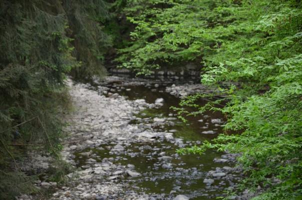 Entschleunigung und Ruhe auf dem Westerwald Steig #TTwandern ©entdecker-greise.de