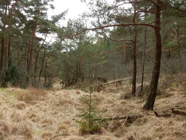 Der Bergbauweg besticht durch eine herrlich wechselbare Landschaft ©entdecker-greise.de