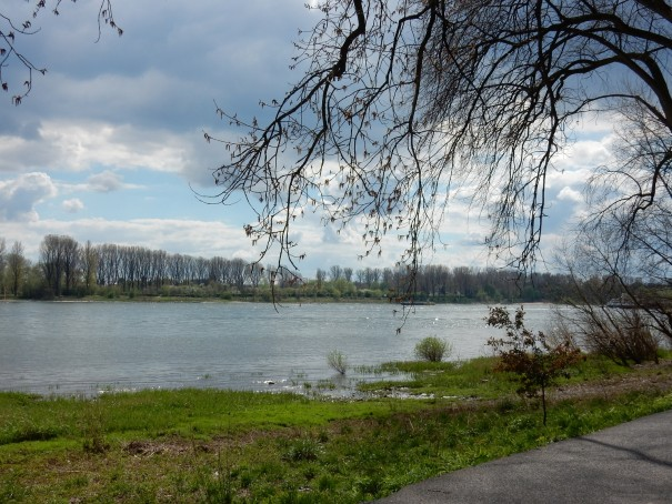 Überall auf dem Rad Rheinweg laden Ruhebänke zum Verweilen und Genießen ein. ©entdecker-greise.de