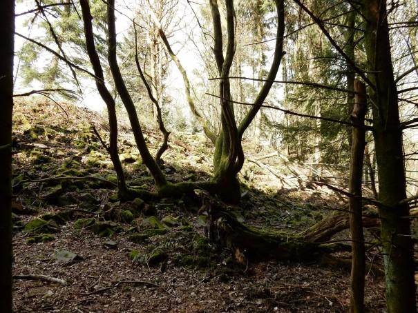 Mystische Abschnitte hier auf dem Steinhauerpfad. ©entdecker-greise.de