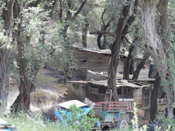 Alte Lagerhütten im Olivenhain. #Corfelios ©entdecker-greise.de