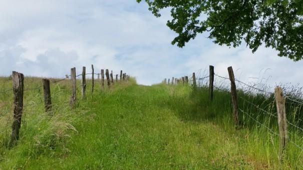 Der Weg als Ziel ... #Bergische50 ©entdecker-greise.de