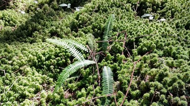 Man kann sich gar nicht satt sehen, an diesen Wunderwerken der Natur. Unterwegs auf dem Klangpfad. ©entdecker-greise.de