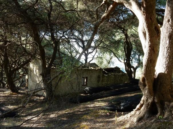 Ob hier früher jemand mitten im Olivenhain gewohnt hat ... ©entdecker-greise.de