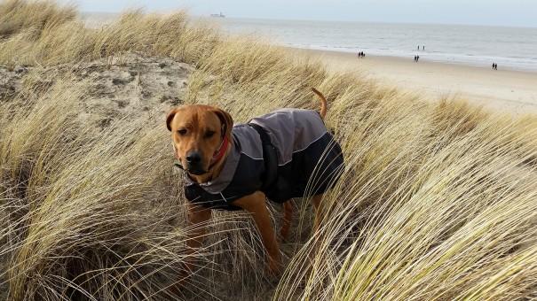 Hunde sind heutzutage vollständige Familienmitglieder - dem muss auch auf Reisen Rechnung getragen werden! ©www.entdecker-greise.de
