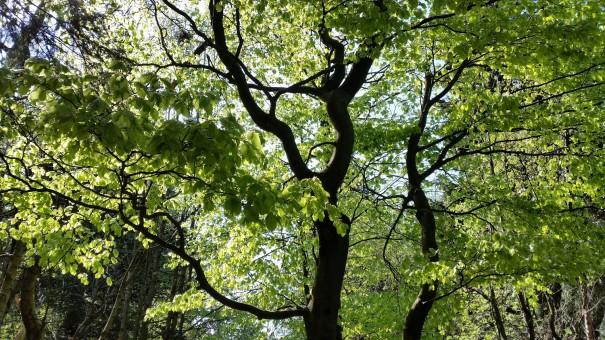 Die Natur ist einfach der beste Achtsamkeitstrainer ... ©www.entdecker-greise.de