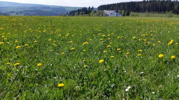 Saftige Wiesen laden zum Picknick im Grünen ein. ©www.entdecker-greise.de