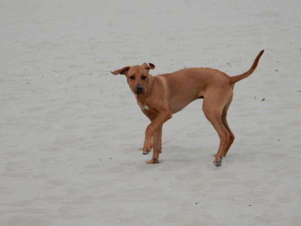 So macht Reisen mit Hund einfach Spaß. ©www.entdecker-greise.de
