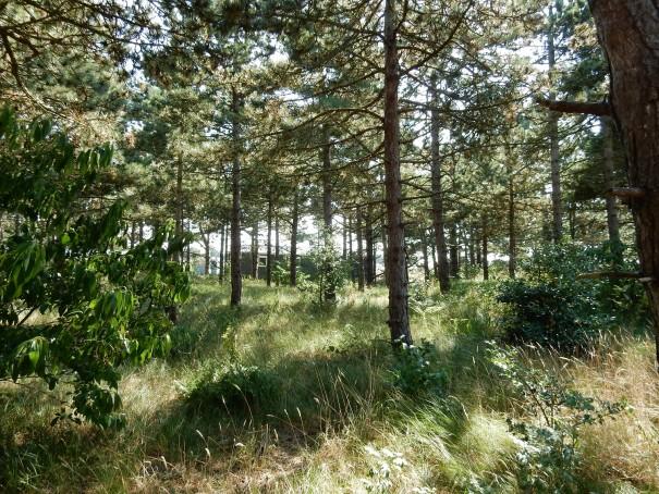 Und wenn es mal zuviel wird mit der Sonne, dann sucht man sich einfach ein schattiges Plätzchen unter dem auch auf Texel vorhandenem großen Baumbestand. ©www.entdecker-greise.de