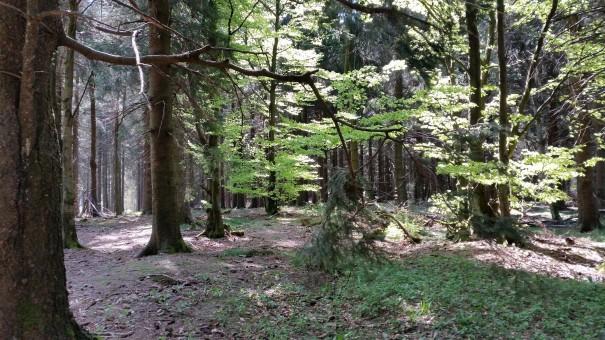 Wandern im Sauerland heißt Entspannung und Entschleunigung pur. ©www.entdecker-greise.de