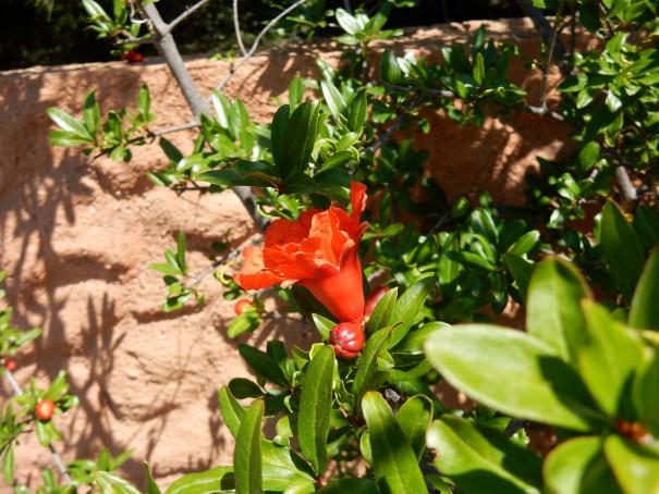 Überall blüht es ... ©www.entdecker-greise.de #corfelios